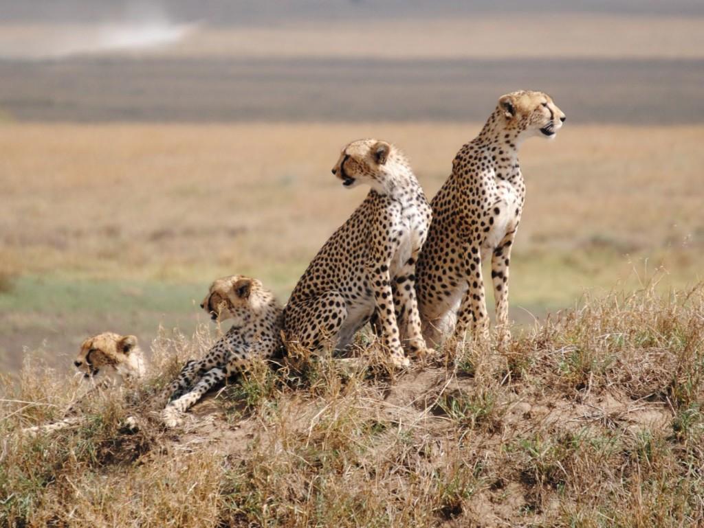 Day-4_Serengeti-National-Park