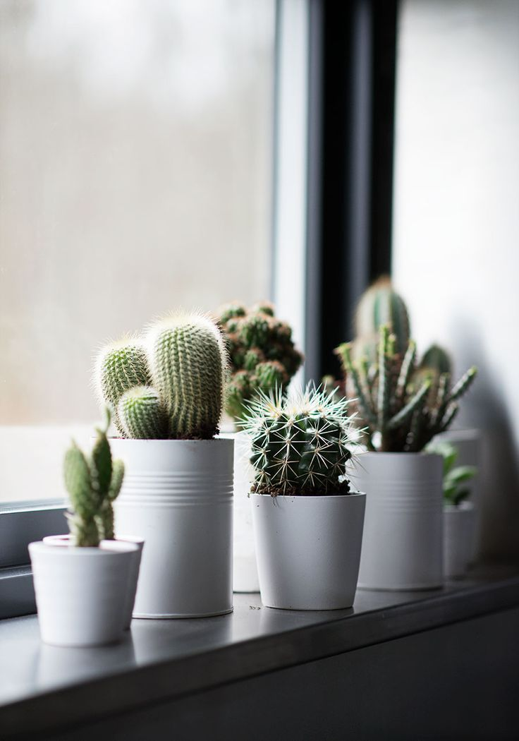 20 Amazing Ways To Mix A Cactus Into Your Home Decor