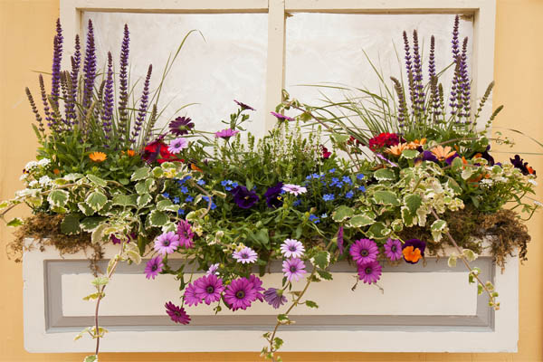 17.-windowbox-flowers