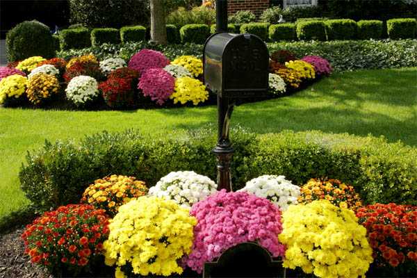 2.-mums-with-mailbox