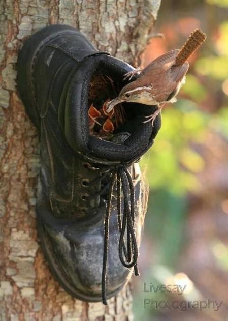6-shoe-birdfeeder