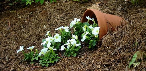 Spilling-Flower-Pot-1