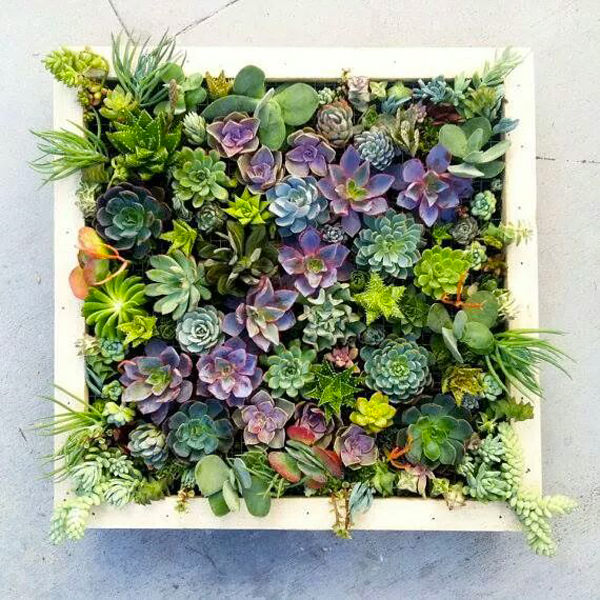 diy-plant-picture-frame-1