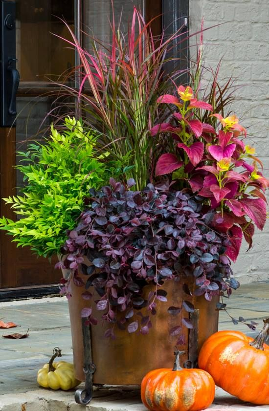 Genius ideas how to use old barrel for planting flowers for Low maintenance fall flowers