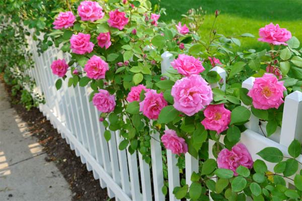 garden-fence27