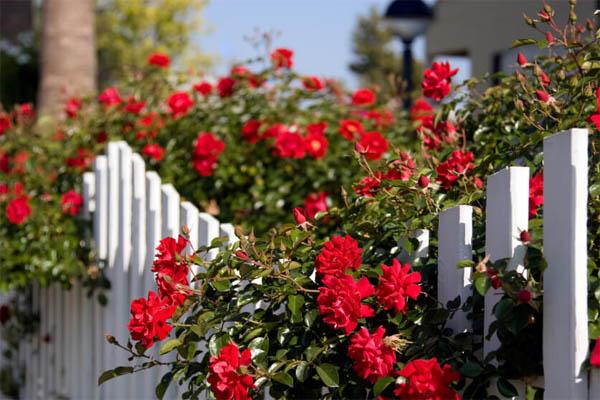 garden-fence9