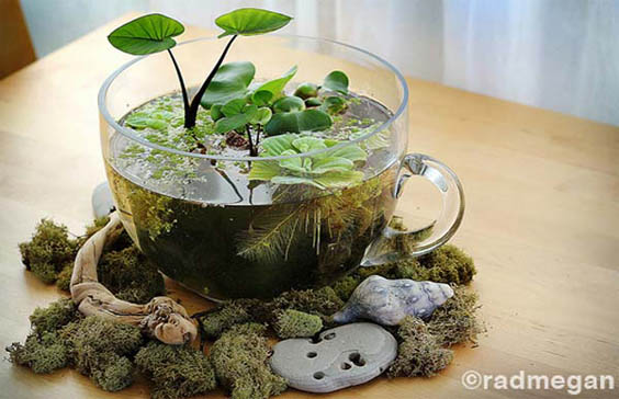 24-of-the-most-beautiful-ideas-on-indoor-mini-garden-to-collect-homesthetics-8
