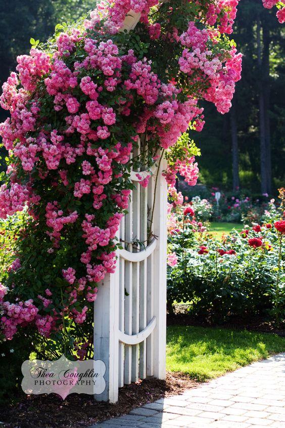 Garden Walk Buffalo Through The Garden Gates 6: 12 Fabulous Floral Garden Gates In Bold Color