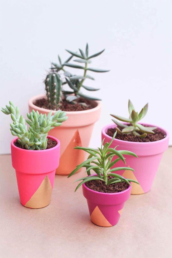 bold-succulent-pots