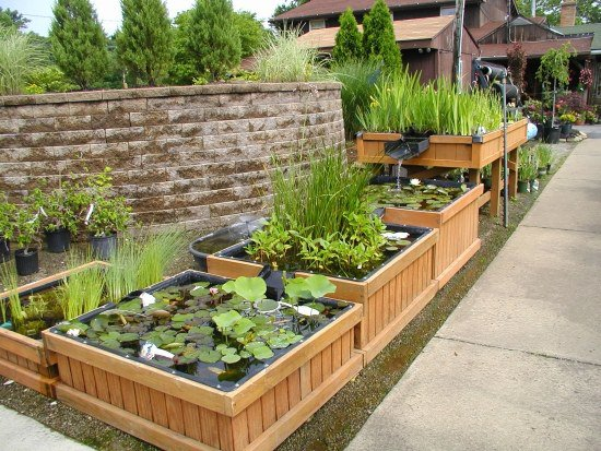 diy-mini-garden-pond-in-bucket-in-square-containers-water-garden