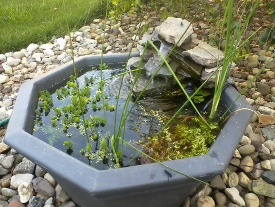 diy-mini-garden-pond-geometric-shape