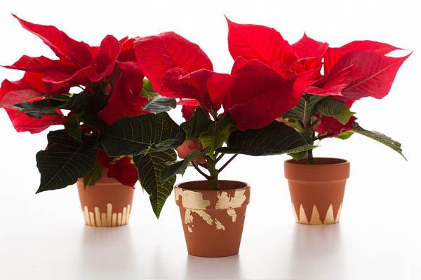 gold-leaf-terracota-pots