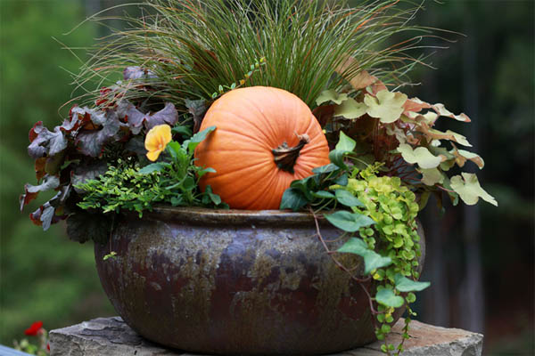 fall-container-idea-01