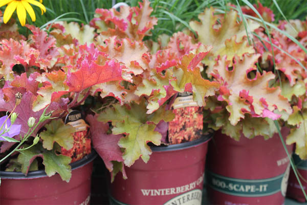 fall-container-idea-12
