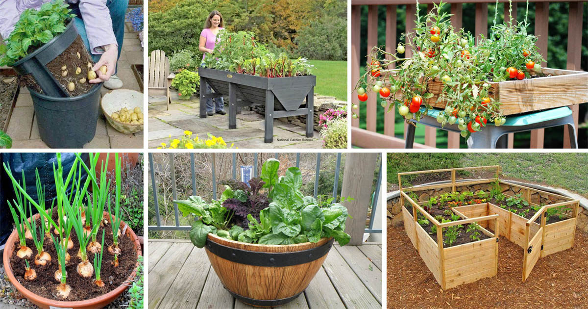 Diy healthy and organic vegetable container garden the for Organic container gardening