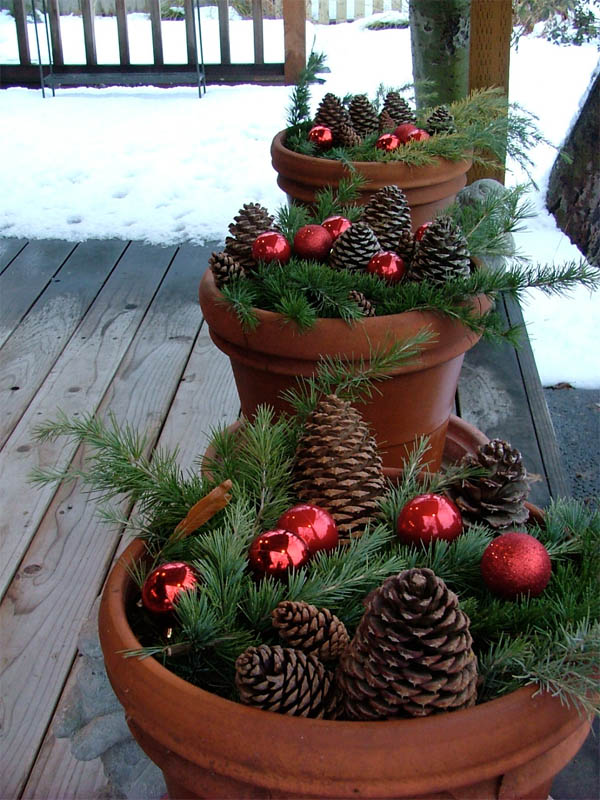32-potted-pine-comb-glory-homebnc