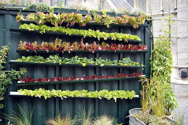 6-real-live-vertical-farm