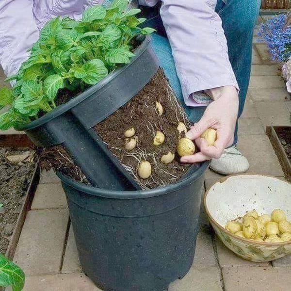 vegetable-container-garden-the-art-in-life-3