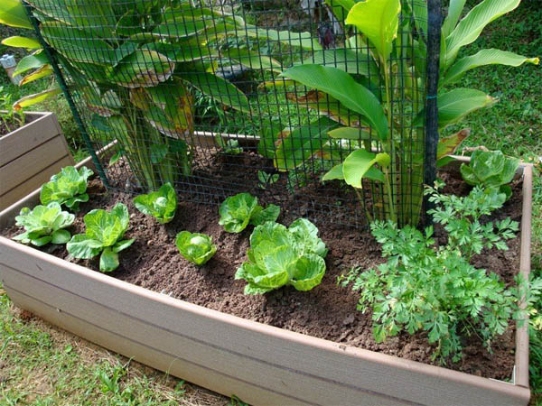 vegetable-container-garden-the-art-in-life