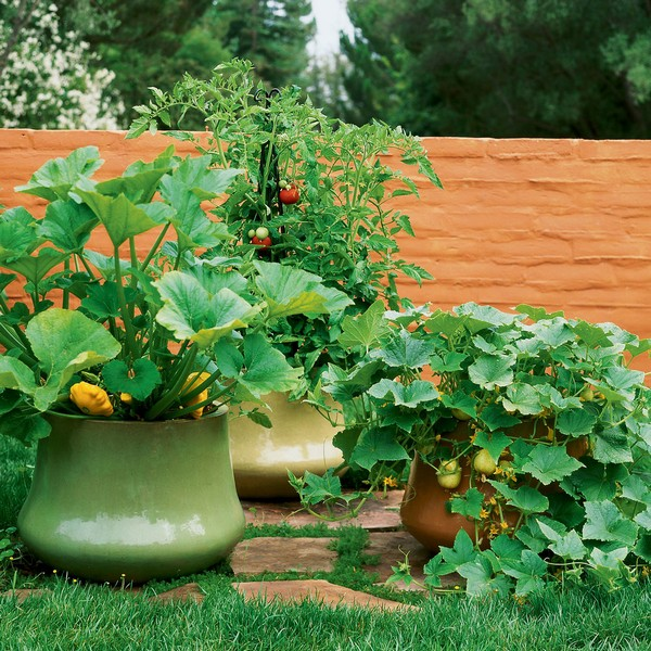 Vegetable Flower Container Gardening Ideas: 10 Fresh Ideas For Growing Veggies In Containers