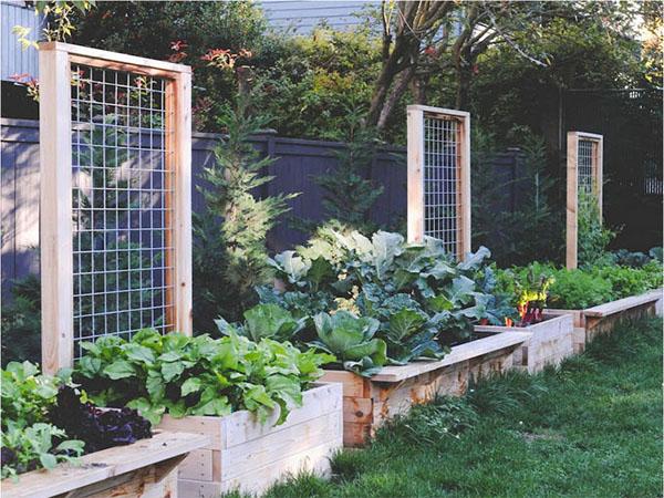 15 Creative And Easy Diy Trellis Ideas For Your Garden