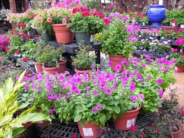 8 Common Mistakes To Avoid When Buying Plants From Nursery ...